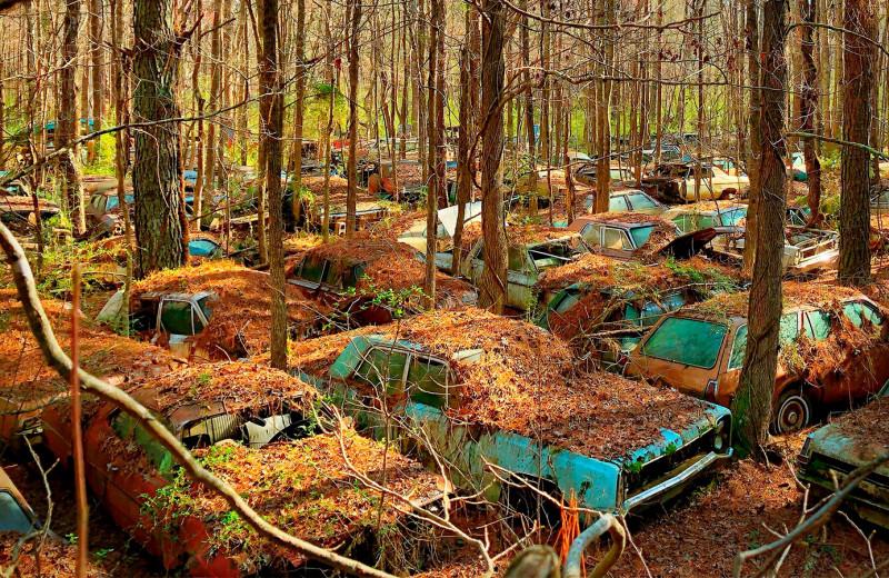 Гниющие миллионы: 6 загадочных автомобильных кладбищ
