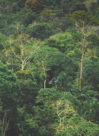 Зеленый шум: фоторепортаж из самого большого тропического леса планеты