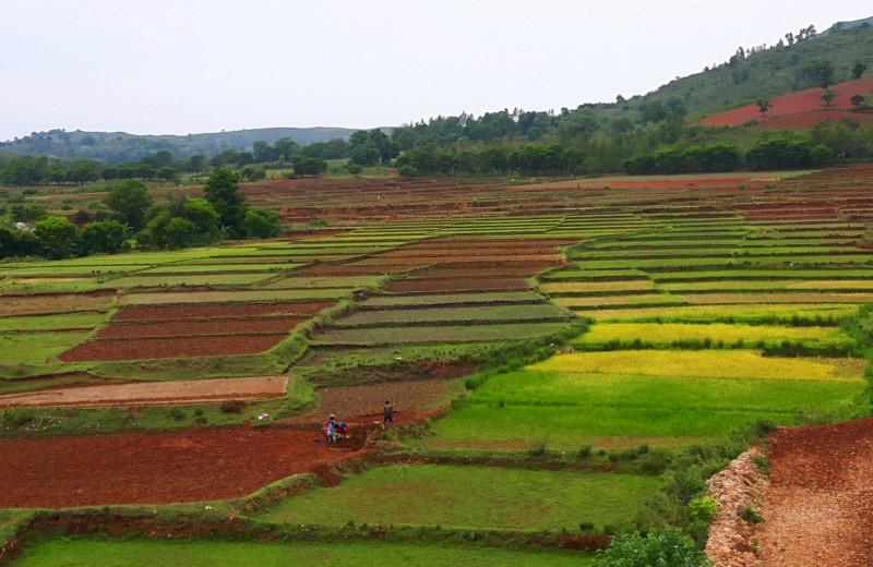 Расширение сельского хозяйства нарушит ареал почти 90% позвоночных к 2050 году