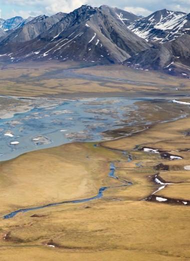 Глобальное потепление сделало арктических пауков каннибалами