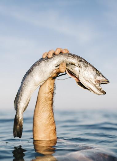 Легко: ловить рыбу голыми руками