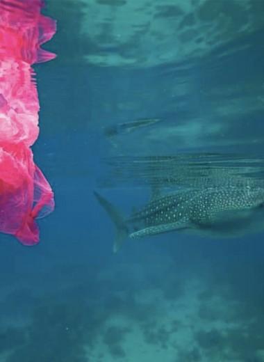 Шампунь из пластика. Как построить успешный бизнес и спасти океан
