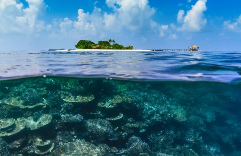 Подводная съемка для всех от Maafushivaru Maldives