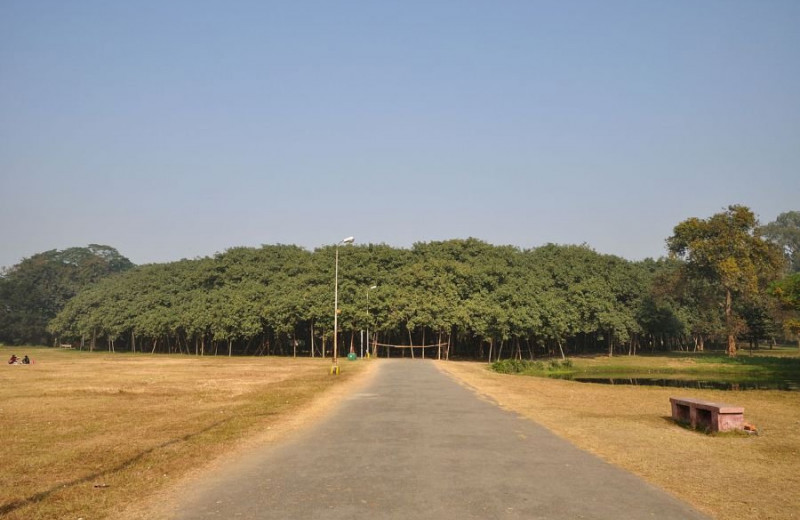 Великий баньян: дерево с самой большой в мире площадью кроны