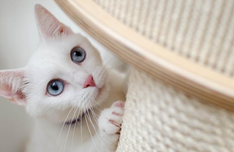 Пять трюков, которым можно научить кошку