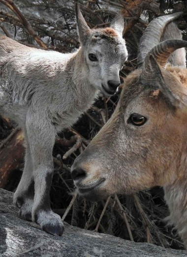 Пополнение в семье туров в Московском зоопарке