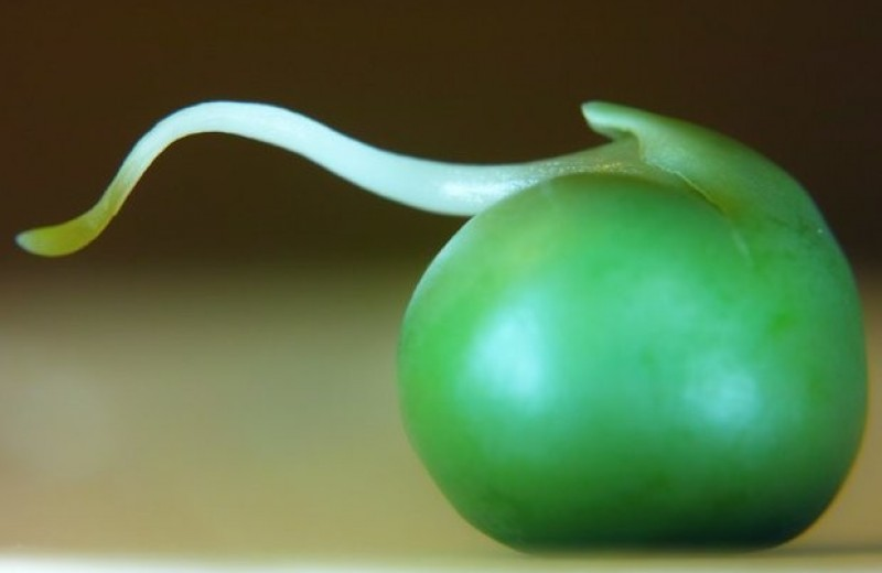 В растениях нашли скопления амилоида