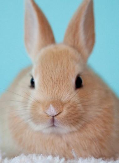 Не тестируется на животных: кто и на ком проверяет косметику и бытовую химию и при чем здесь этика