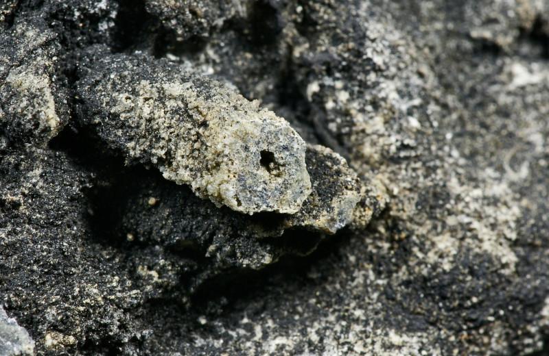 «Черновики господа Бога»: загадочные организмы докембрия