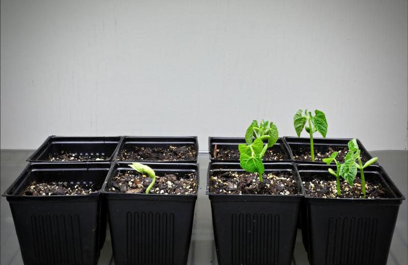 Новая технология помогает семенам бороться с длительной засухой