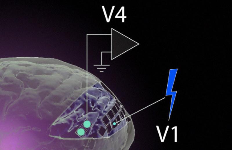 Микростимуляция зрительной коры помогла макакам увидеть буквы на пустом экране
