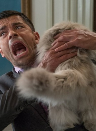 6 признаков, что твоя кошка тебя ненавидит (сочувствуем, бро)