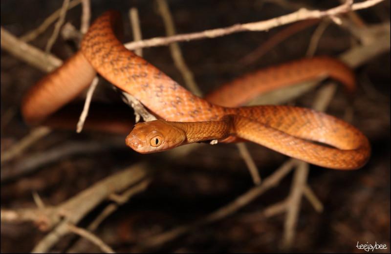 Обнаружен совершенно новый способ передвижения змей: видео