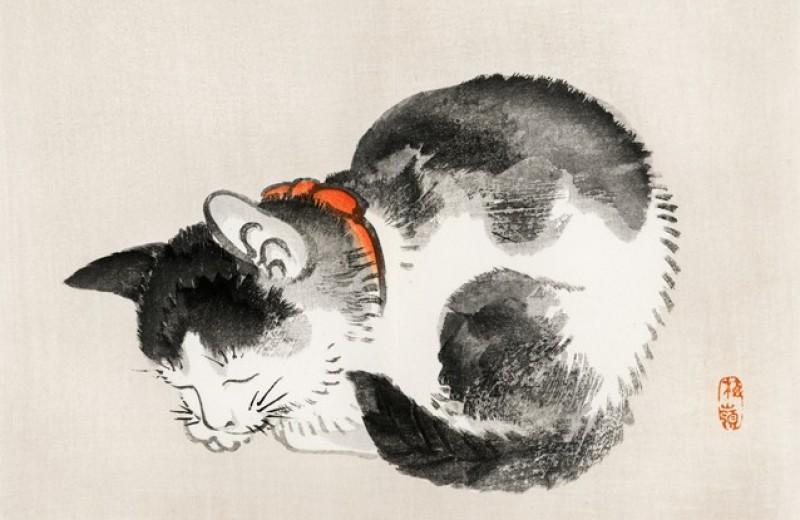 Гэнки Кавамура: Если все кошки в мире исчезнут
