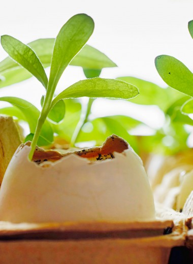 7 растений, которые нужно удобрять яичной скорлупой