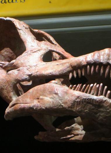 В Аргентине нашли останки гигантского динозавра. Он мог быть крупнейшим сухопутным животным на Земле