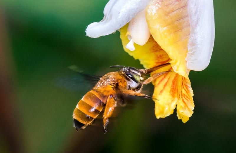 Создана первая карта глобального биоразнообразия пчел на планете