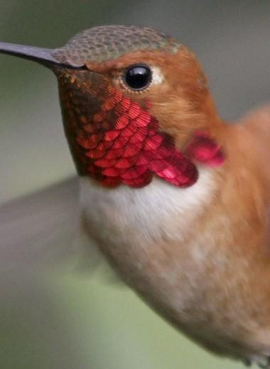 Животные и математика: до скольки умеют считать колибри