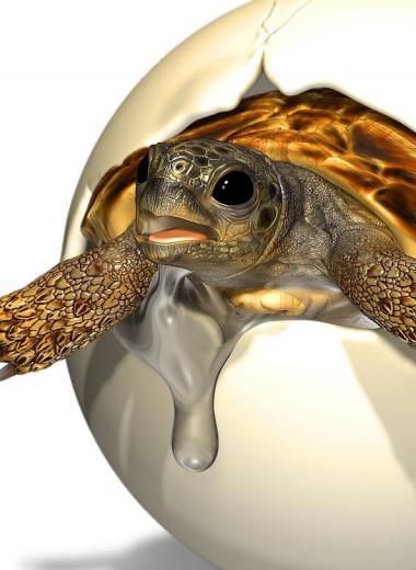 Ученые нашли яйцо доисторической черепахи с сохранившимся внутри эмбрионом