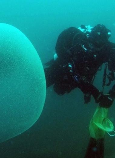 Гигантские студенистые сферы из Атлантики оказались скоплениями яиц кальмаров