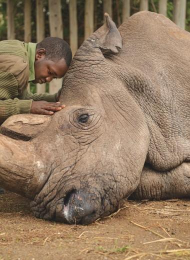 Встреча с последним самцом белого носорога: воспоминания о Судане