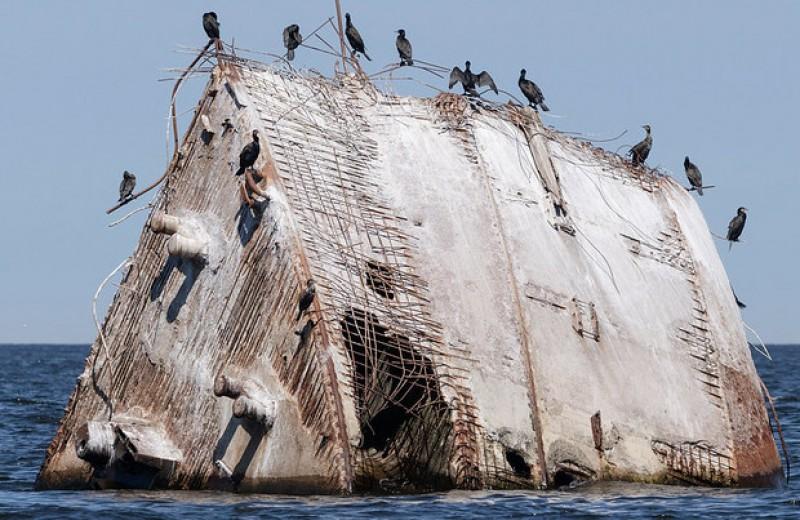 Изобретательность не спасла птиц от инвазивных видов и человека
