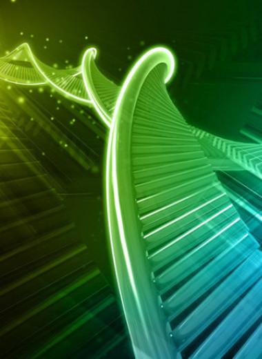 Полусинтетический организм с «лишней» парой оснований в ДНК