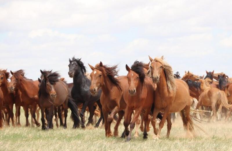 Прародиной современных домашних лошадей назвали степи Причерноморья