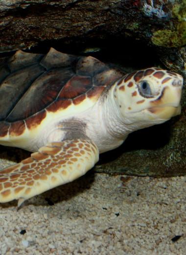 Пластик нашли даже в мышцах морских черепах