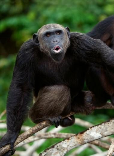 Социальное дистанцирование в мире животных