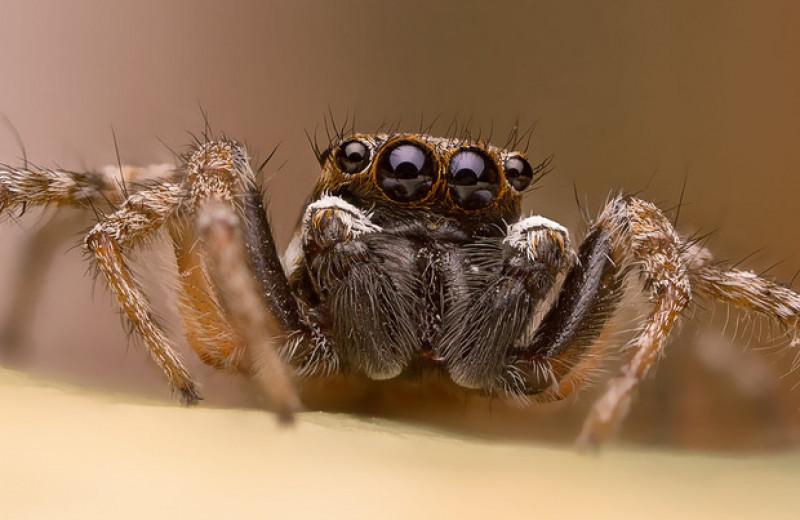 Скакунчики узнали пауков в движущихся силуэтах из точек
