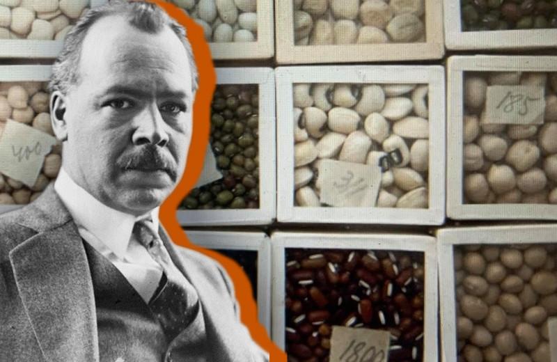 Как ленинградские ученые погибли от голода среди мешков продовольствия