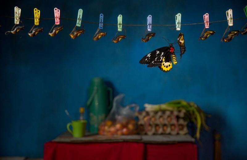Профессия: охотники за бабочками