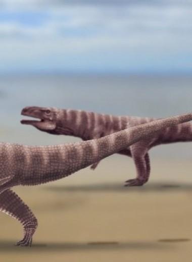 Обнаружены древние следы, которые принадлежат двуногим предкам крокодилов