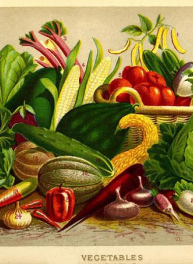 Выращивание гороха наряду с пшеницей снизит выбросы и повысит питательную ценность урожая