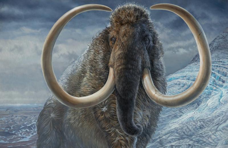 28-летний шерстистый мамонт обошел всю Аляску