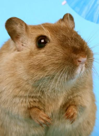 Найден самый легкий способ похудеть. Пока – для мышей