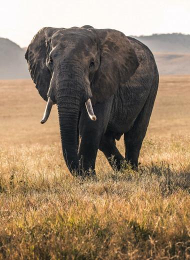 Самый одинокий слон в мире наконец обретёт дом и семью