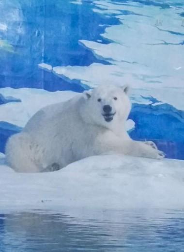 Жизнь налаживается: «самый грустный белый медведь вмире» два года спустя