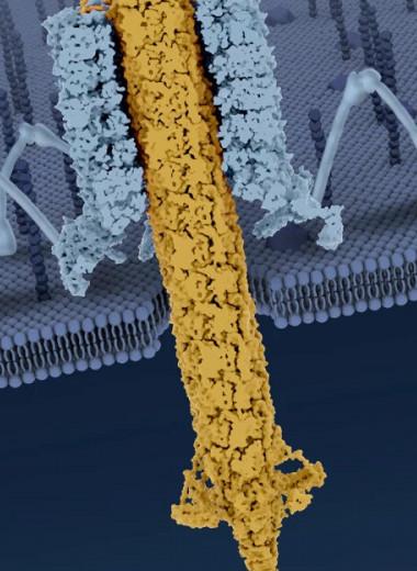 У бактерий обнаружены