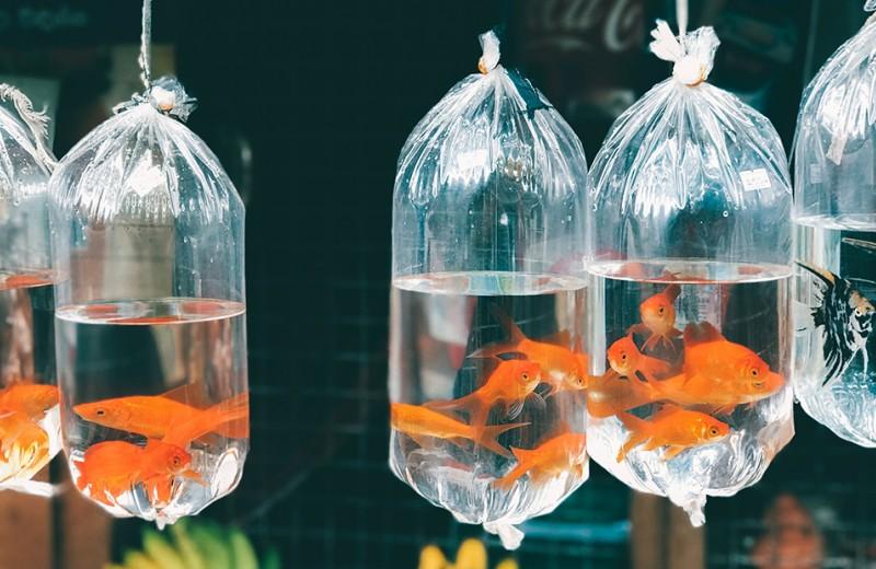 5 мифов об экологии, в которые давно пора перестать верить