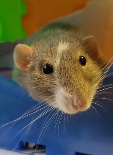 Самец млекопитающего впервые выносил нормальное потомство после пересадки матки
