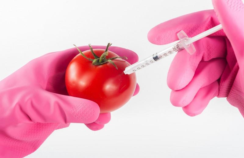 От помидора до человека: чем опасна и на что способна ГМО