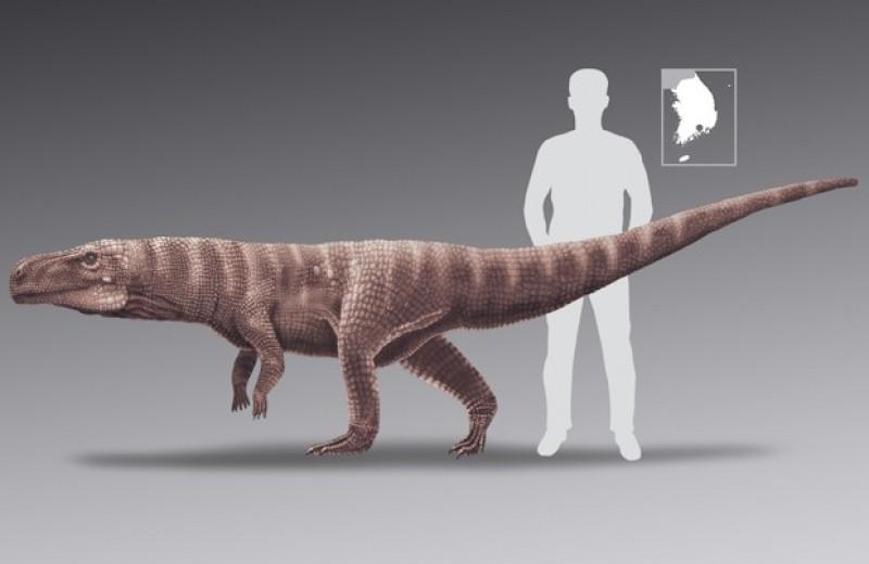 Следы крупных птерозавров в Корее приписали наземным двуногим крокодиломорфам