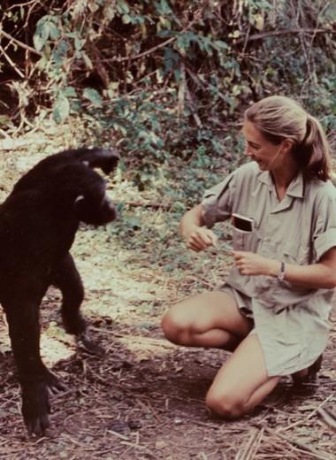 «В тени человека»: посол мира ООН о том, как изучение обезьян помогло лучше узнать людей
