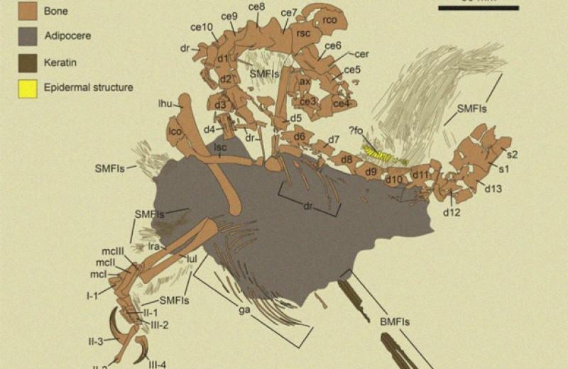 Бразильский динозавр отрастил перьевой гребень и по паре шипов на плечах