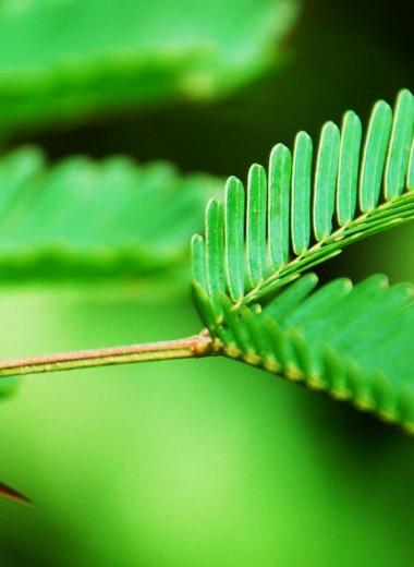 Муравьи и растения: роман длиною в тысячелетия