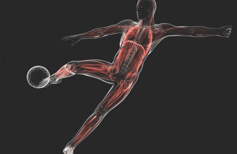 Тело футболиста: разбираем на органы знаменитых спортсменов