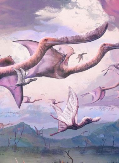 Птерозавры могли летать сразу после вылупления