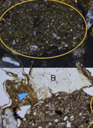 Палеогенетики выделили ДНК древнего человека из отложений в грузинской пещере